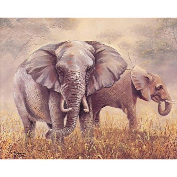 Beaux éléphants.