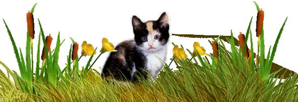 Résultat d'images pour Gifs barre de séparations chats